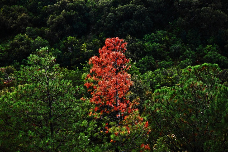 tree-57119_960_720
